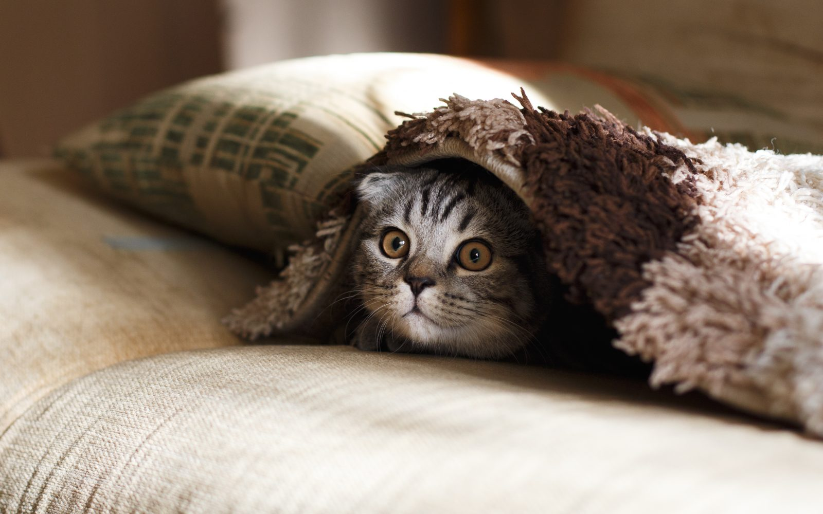 Comment Fabriquer Un Arbre À Chat diy] comment faire son arbre à chat soi-même ? | musée du parfum